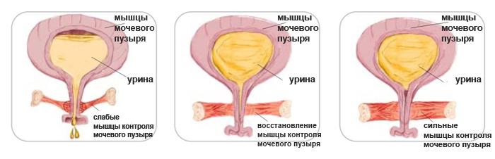 intimnie-mishtsi-nefritovie