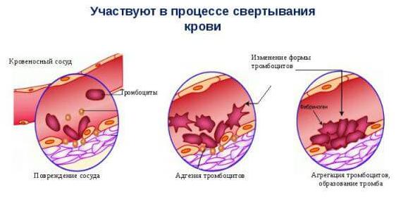 Норма тромбоцитов в крови у женщин после 40 лет из вены натощак или нет